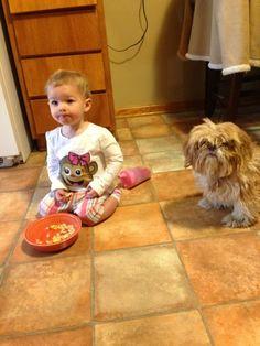 Shih Tzu Puppies!!! Shih Tzu Puppy, Cheap Web Hosting, Asd, Arsenal, Life Is Good, Pattern Design, Puppies, Random, News