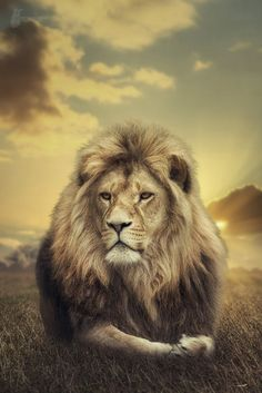 ~~King of Africa | male lion | by Harry Schindler~~