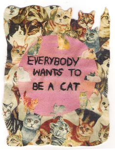 <3 everybody wants to be a cat