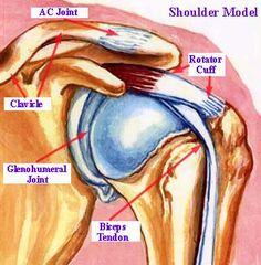 shoulder AC joint