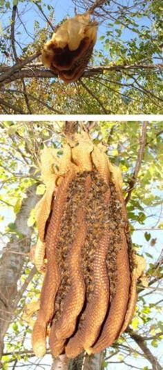 Wild honeycomb - that is awesome