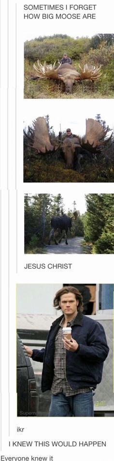Big moose, post about spn Sam