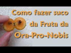 Suco de fruta da Ora-Pro-Nobis Ora Pro Nobis Planta, Terra, Detox, Youtube, Juice, How To Make Juice, Healing Herbs, Floral Arrangements, Juices