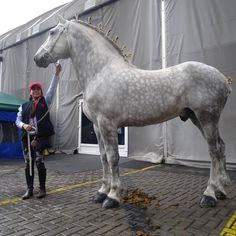 This horse is a big boy! How handsome!