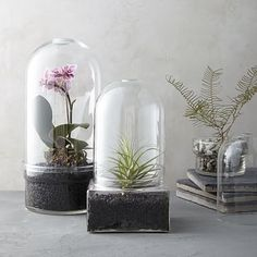 Glass Cloche Terrariums #westelm