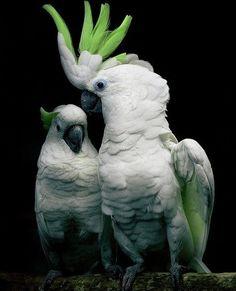 Green Parrot #bird #animal