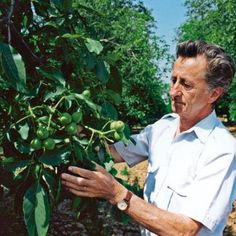 Vegetatívne rozmnožovanie orecha kráľovského