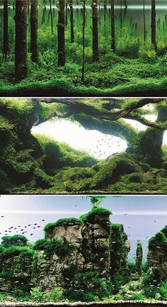 All Lovely examples of aquascaping. A subject in which I would like to educate myself further. I would like to utilize similar ideas but using edible water plants and edible fish for the large aquarium I plan to have in my future home.