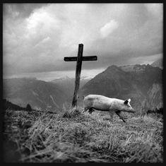 Romano Riedo From Alpzeit Wind Turbine, Magic, Mountains, Black And White, Portrait, Nature, Animals, Pandora, Art Gallery