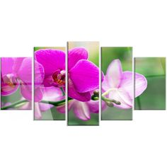 DesignArt 'Beautiful Orchid Flowers on Green' 5 Piece Photographic Print on Canvas Set