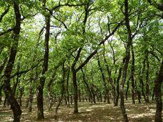 Εντυπωσιακά δάση στην Ελλάδα Science And Nature, Planets, Science And Nature Books