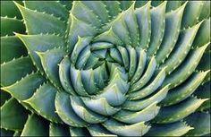 fractales en la naturaleza - Buscar con Google