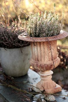Modern Country: Early, crisp and cold, but beautiful. Contemporary Garden, Contemporary Classic, Back Gardens, Outdoor Gardens, Soft Autumn, Autumn Feeling, Autumnal, Old Vases, Garden Urns
