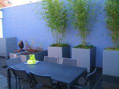 Bamboo in galvanised steel planters