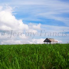 Old Farm Shed | Experience Jamaique Farm Shed, Experience, Old Farm