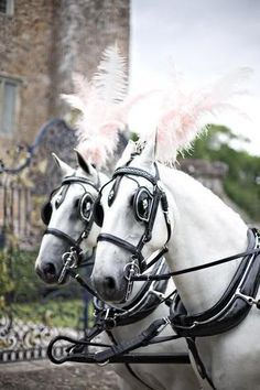 Fairy tale pink feathered white horses