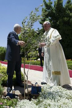 Pope Francis, right and Israeli President Shimon Peres talk after planting an olive tree in the garden of the Israeli President's official Residence... the olive tree is traditional sign of peace. #PopeinHolyLand 24 to 26 May 2014