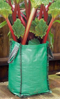 you can grow rhubarb in a sack, I have those black potato grow bags I think would work.