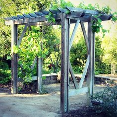 This arbor will be loaded with grapes in a few months! 😋💜Free building plan on the blog here- apieceofrainbow.com/diy-arbor-building-plan  .