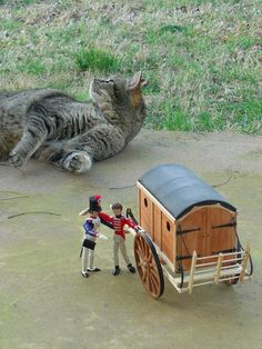 My cousin makes these incredible little 'poppets' (based on historical or fictional characters) and they have adventures. Sometimes, the cats get involved.