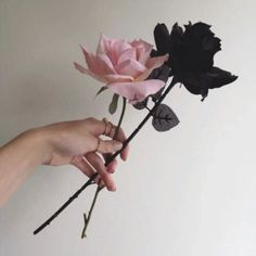 faded tumblr aesthetics hipsters photography instagram ideas inspiration flowers