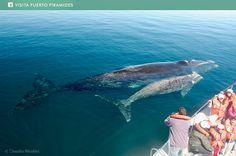 Desde nuestra aldea se realizan los avistajes de #ballenas francas australes en Patagonia, de Junio a Diciembre!