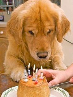 happy birthday, happy birthday, happy...................