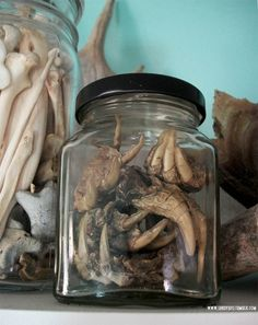 Jar o' Snapping Turtle Feet  http://steampunkincornwall.blogspot.co.uk/