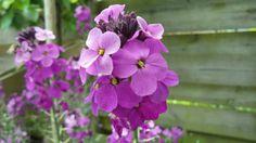 Ik geniet met volle teugen van alle mooie bloemen in de tuin #stadstuin Plants, Blog, Gardens, Blogging, Plant, Planets
