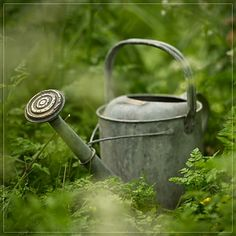 Oh here's that old vintage watering can. I just love using it instead of those newfangled ones.........