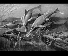 Ichthyosaurus  by Heinrich Harder (1858-1935)  from Die Gartenlaube Magazine  1906 Germany