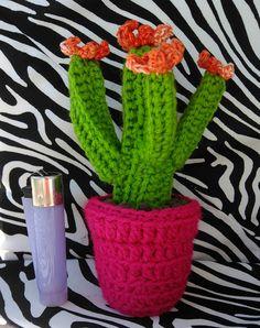 Cactus pequeño.
