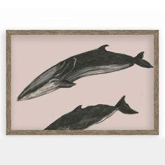 Framed Print - Whale Charcoal II