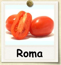 How to Grow Roma Tomato | Guide to Growing Roma Tomatoes
