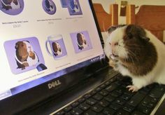 Betty is admiring her own range of gifts! What a vain piggie! www.popcornprints.co.uk