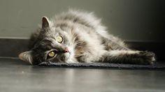 Miauw / poes / kat / lovelycat
