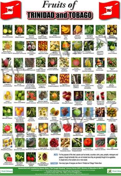 Fruits of Trinidad Tobago.....funny being born and raised there and some of these fruits I have never tried!!!