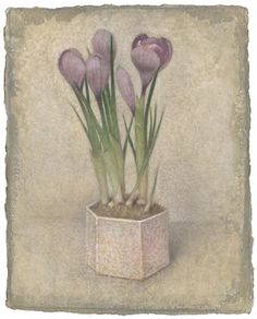 Flowers, by Victor Koulbak (Russian, born Works on Paper, Silverpoint, watercolor Watercolour Painting, Watercolor Flowers, Silverpoint, Mark Rothko, Flower Pictures, Line Drawing, Original Artwork, Flora, Lilacs