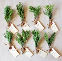 Incense Cedar Bundles from your own Christmas Tree! Cheap DIY, gift giving, how to make your own incense bundles, holiday gifts, boho style gifts, cool gifts, easy DIY #incense #holidaygifts #howto #cheapdiy #easydiy