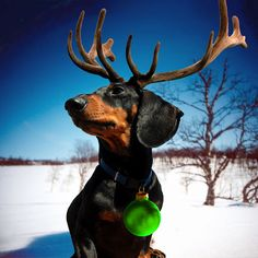 wiendeer - distant cousin of the jack-a-lope ... love love love hahaha