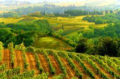 wine vineyards italy - Google Search