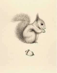 36 Squirrel Drawing Acorn Card by sandramehlgreetings on Etsy
