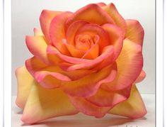 Flowers - Peace Rose, my moms favorite flower. I used gumpaste Fondant Bow, Fondant Flowers, Sugar Flowers, Fondant Cakes, Fondant Figures Tutorial, Cake Tutorial, Peace Rose, Chocolate Flowers, Gum Paste Flowers