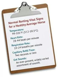 Normal vital signs of a horse