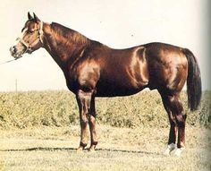 Rocket Wrangler, sire of Dash for Cash