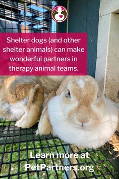 Can My Shelter Pet Be a Therapy Animal? | Pet Partners | YES! Pet Partners has some great tips for finding the right shelter pet for your therapy animal team. Dogs, cats, rats, guinea pigs, birds, and even rabbits can be part of a therapy animal team. Get the tips you need to pick the perfect shelter pet for your therapy animal team and explore other great blogs at PetPartners.org. Emotional Support Dog Training, Emotional Support Animal, Training Quotes, Training Tips, Shelter Dogs, Animal Shelter, Pet Dogs, Pets, Therapy Dogs