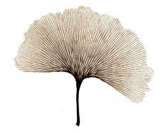X-ray of leaf