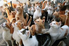 Cats wait to be fed by tourists at Aoshima or Ao Island on November 20, 2014 in Ozu, Ehime, Japan. More than 100 cats live while only 15 people reside in this 0.49 square-meter tiny former fishermen island 13.5 kilometers off Shikoku Island.