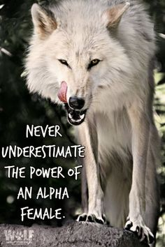 Pretty much only difference is that Liron's wolf side is black-furred. Life Quotes Love, Badass Quotes, Great Quotes, Me Quotes, Motivational Quotes, Inspirational Quotes, Qoutes, Wolf Spirit, My Spirit Animal