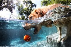 Underwater Dog Photography By Seth Casteel